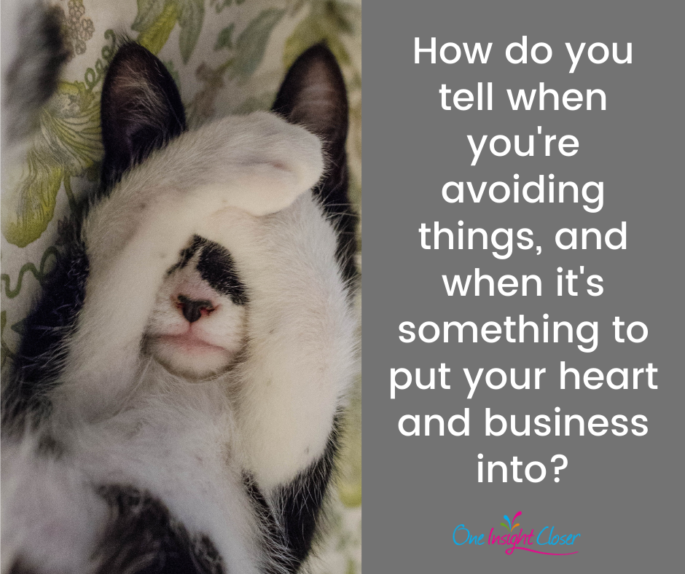 Text on picture of cute hiding cat: How do you tell when you're avoiding things and when it's something to put your heart and business into?